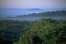 [photograph showing the tree tops in the Amazon Rainforest] & Tropical Rainforest